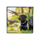 Photo Slate-Black Dog on Grass